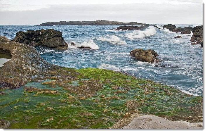 Latest report from MIT: Algae for producing hydrogen fuel