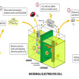 Microbial fuel cells are beginning to acquire a great deal of attention as they continue to show promising results in field tests. Microbial fuel cells are filled with bacteria, most...