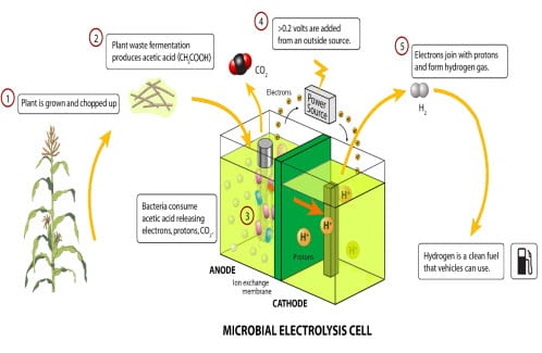 Hydrogen Fuel Cells >> Microbial fuel cells may see improvement through new research - Hydrogen Fuel News