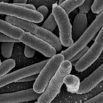 Department of Energy modifies e. coli bacteria to produce biofuel
