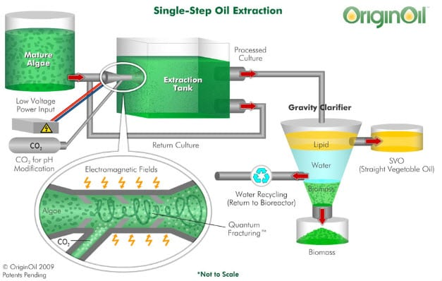 OriginOil looks to build urban algae farm to treat wastewater and generate ...