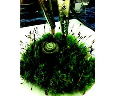 biofuel-snail