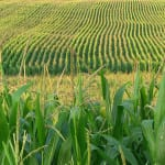 Ethanol may get a boost through breakthrough process