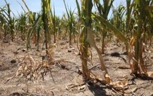 Climate Change - drought