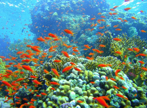 Ocean Acidification Gives Us Another Reason to Use Alternative Energy