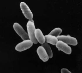 Halobacteria - Hydrogen Fuel