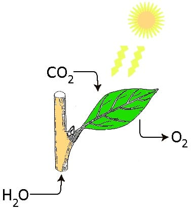 Solar Energy - Photosynthesis