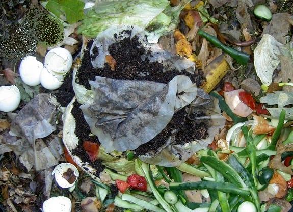 fuel cells - organic waste