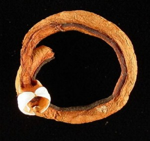 Biofuels - Shipworm