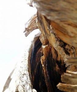 waste to energy - worn wood