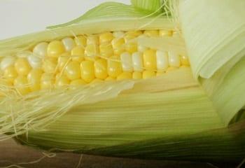 Corn - Hydrogen Fuel