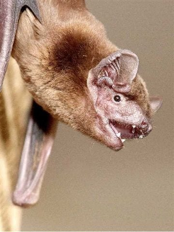Device being developed to protect bats from wind turbines
