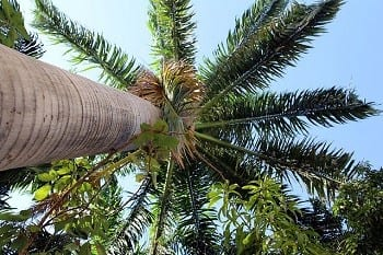 Wind Turbine Tech - Palm Tree