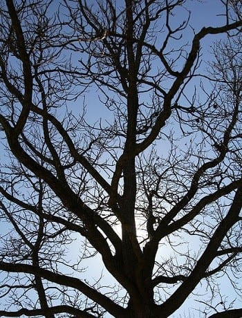 Artificial Trees - Image of tree without leaves
