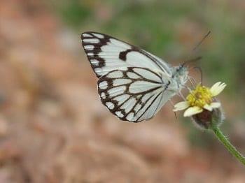 Solar Farms - Butterfly on Flower