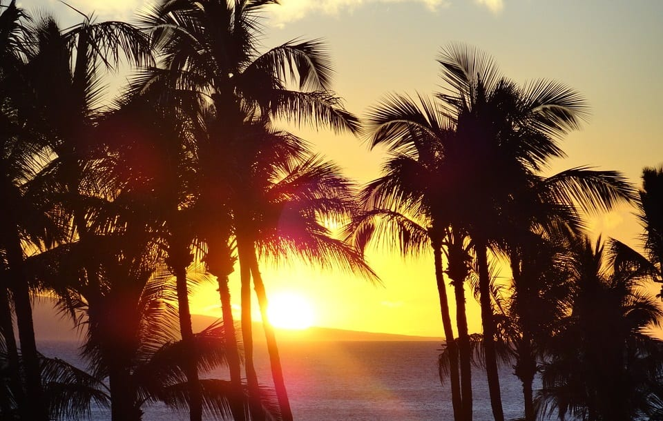 Climate Change - Palm trees and beach
