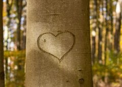 Renewable energy saving lives - heart in tree