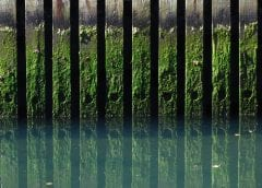FUel Cell System - Image of Algae on Docks