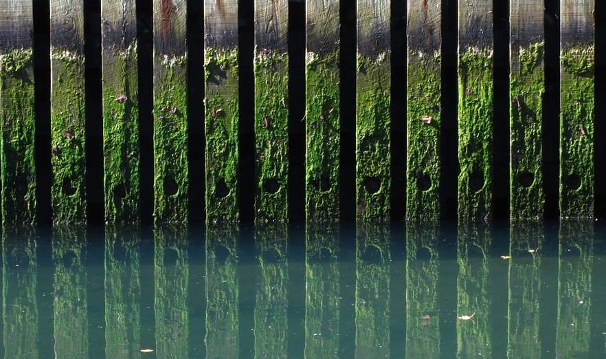 FUel Cell System - Image of Algae on Docks