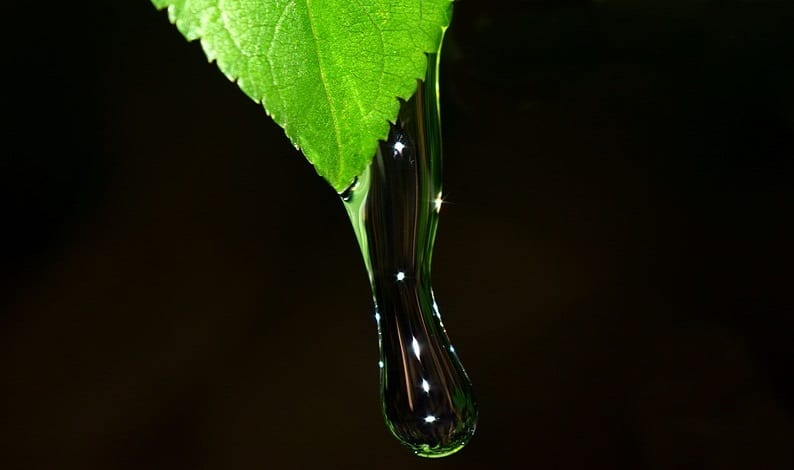 Alternative Fuel Program - Water dripping from leaf