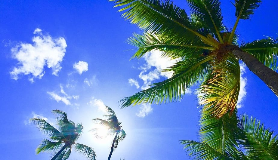 Carbon Neutral - Hawaii Palm Trees - Sun - Renewables