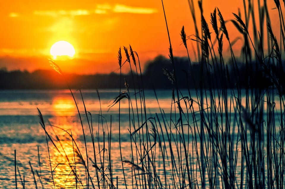 High-performance fuel cells - Reeds by lake at sunset