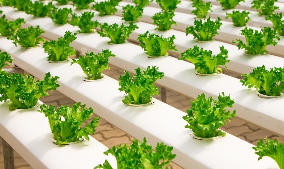 Geothermal energy may make indoor farming work in the future