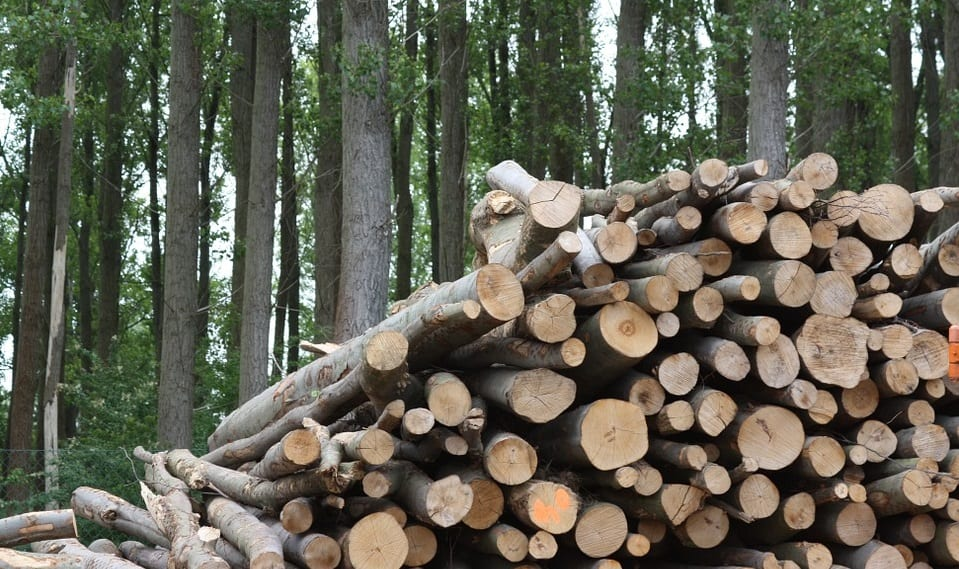 Environmentalists warn that increasing US biomass production is worse than using coal