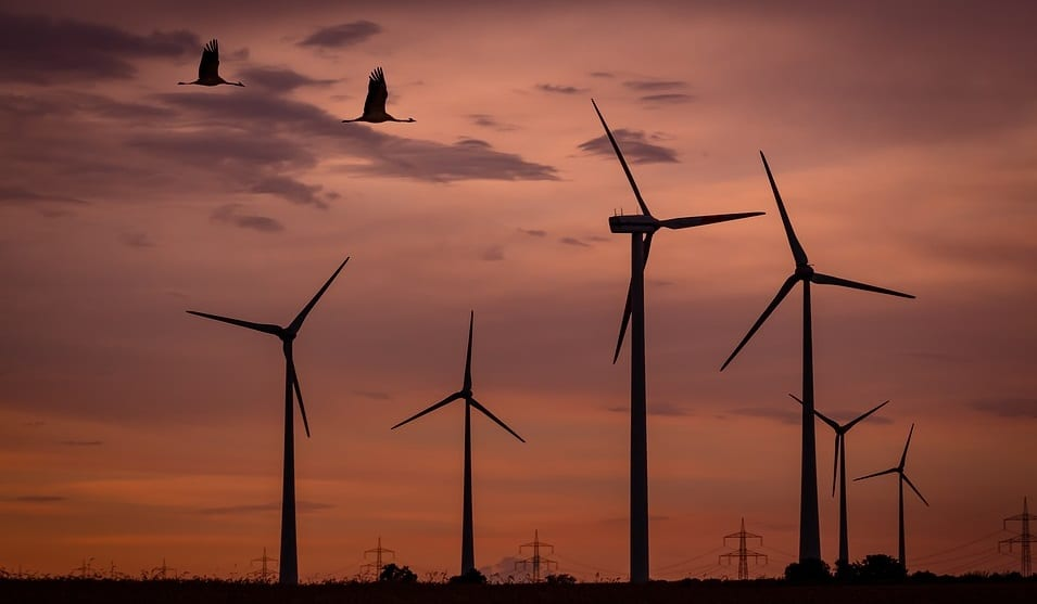 Research finds wind power turbines and wildlife don't mix