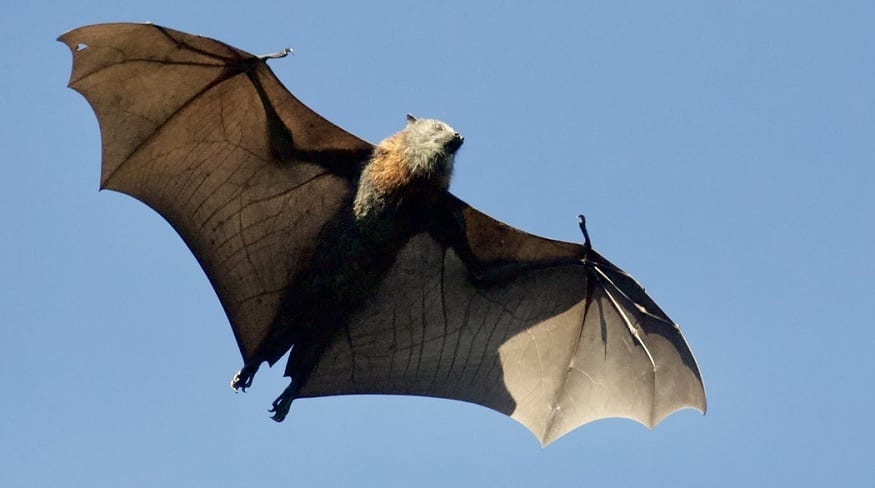 Wind Turbine - Bat in flight