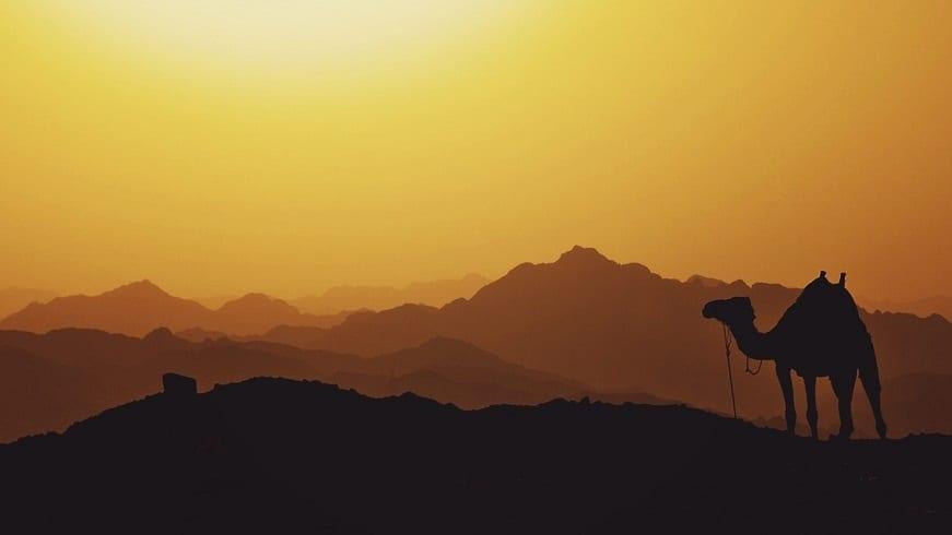 Geothermal electricity - Egypt landscape - sunset - camel