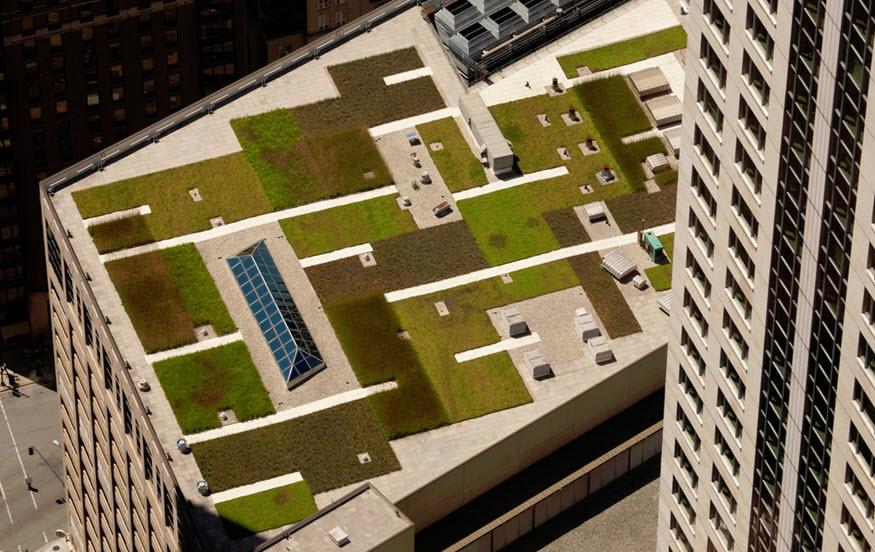 green roof green business