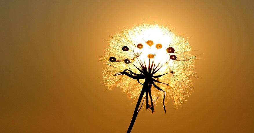 Solar powered hydrogen - dandelion in sun