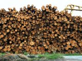 Hydrogen production - pile of wood