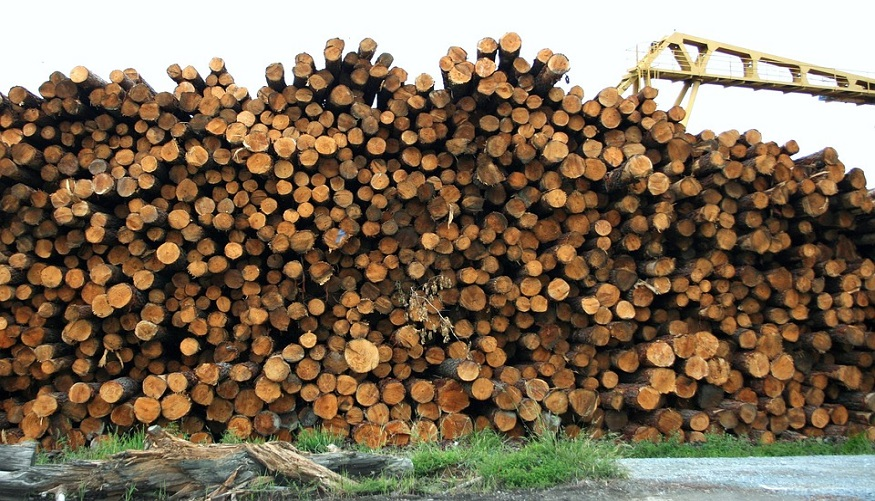 Sweetman Renewables power hydrogen production with sawmill biomass